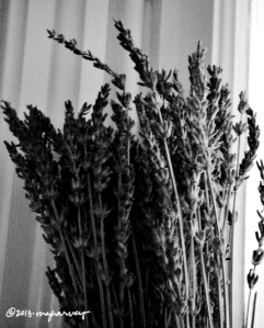 Lavendar, in Laurie's kitchen